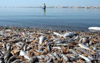La muerte del Mar Menor fruto de la incapacidad cómplice de los políticos
