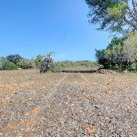Terreno rústico edificable en venta en Algaida